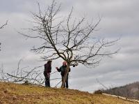Mensch und Baum 4